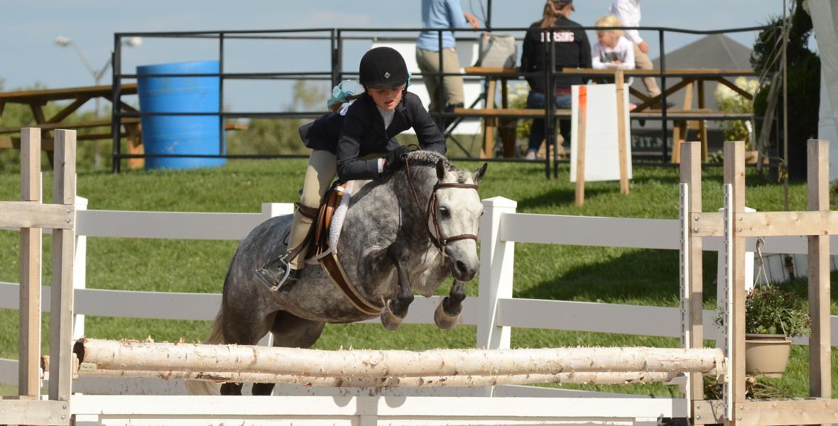 Pony2014